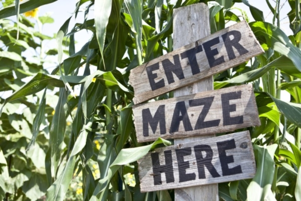 Wooden sign. Text: Enter maze here.