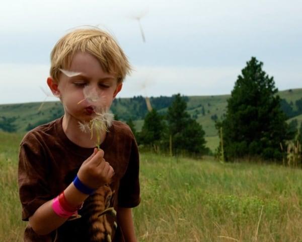 Boy blowing pollen off a dandelion.