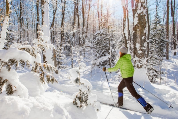 Cross country skier in the woods.