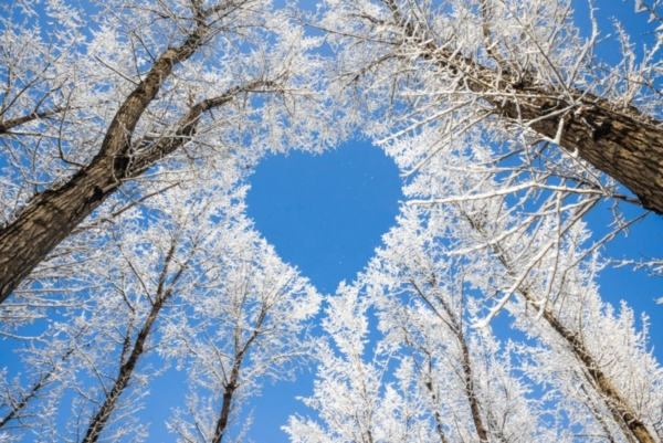 Winter tree branches forming a heart shape.